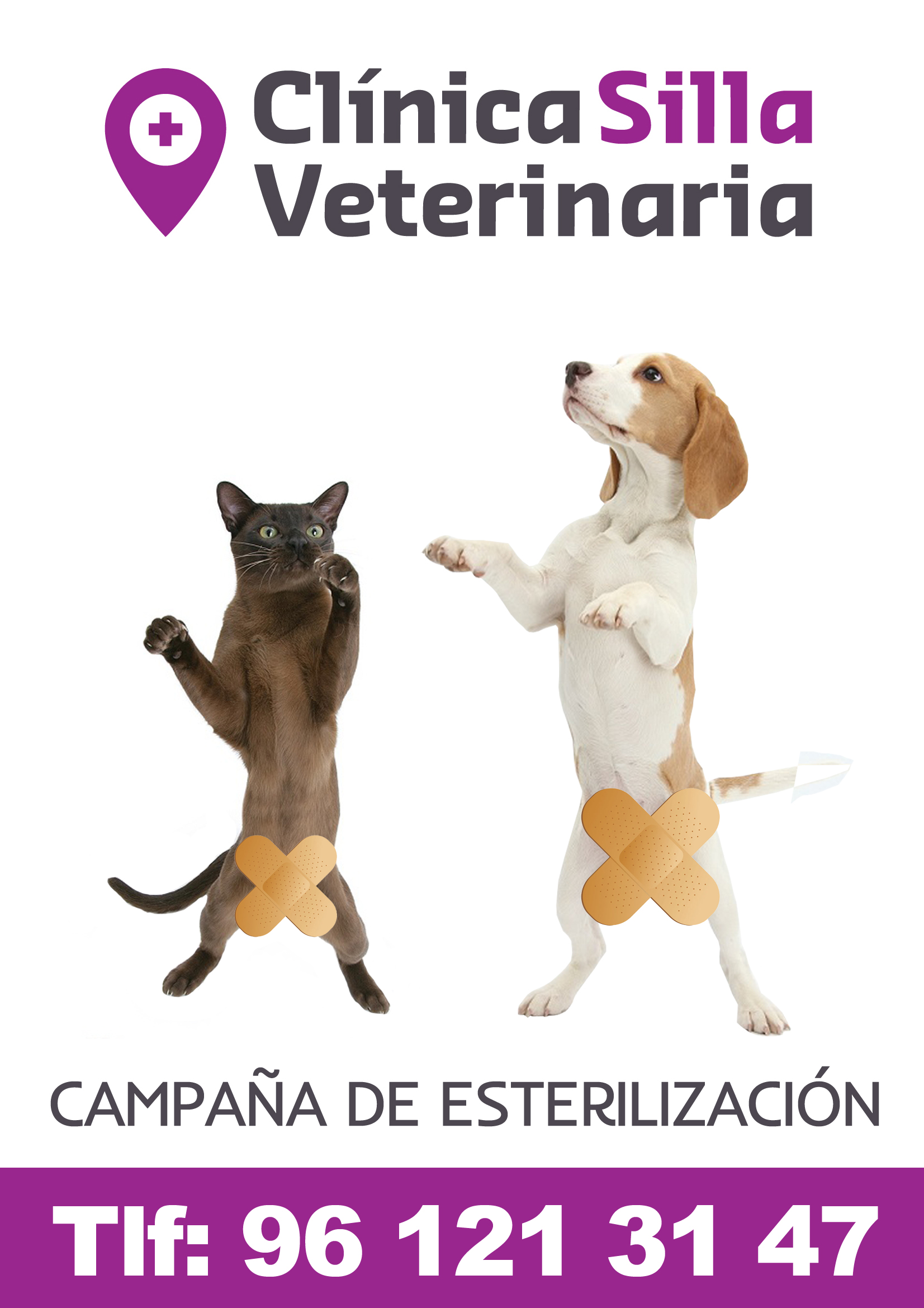 Clinica veterinaria silla campa as en vigor y pr ximas campa as - Clinica veterinaria silla ...