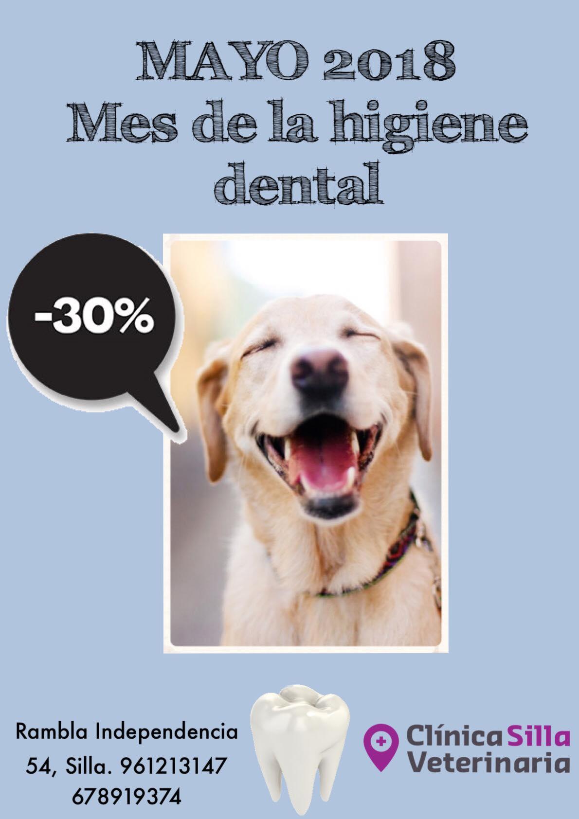 Clinica veterinaria silla mayo mes de la higiene dental - Clinica veterinaria silla ...